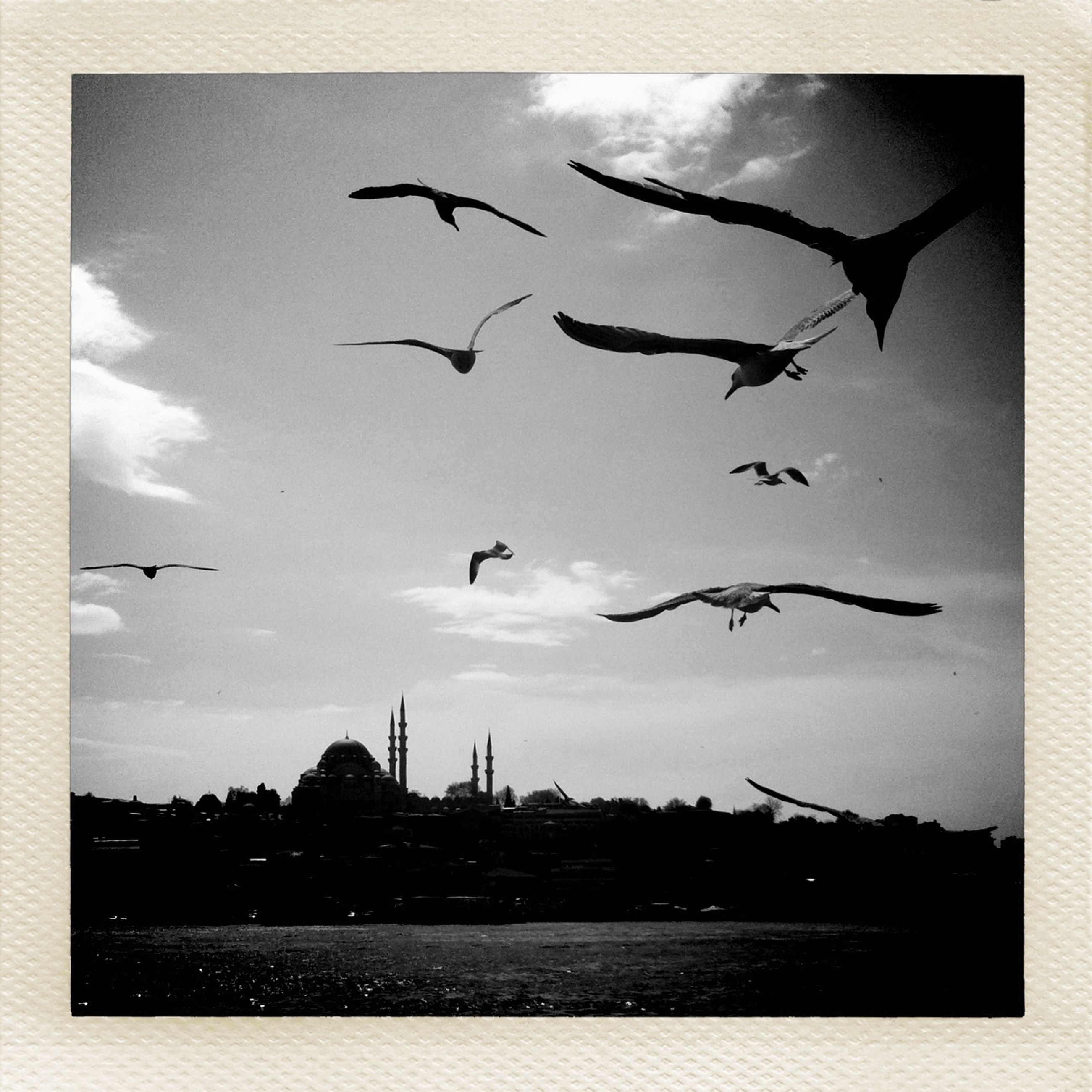 transfer print, flying, bird, auto post production filter, sky, silhouette, animal themes, building exterior, built structure, animals in the wild, wildlife, architecture, flock of birds, low angle view, cloud - sky, mid-air, dusk, city, outdoors