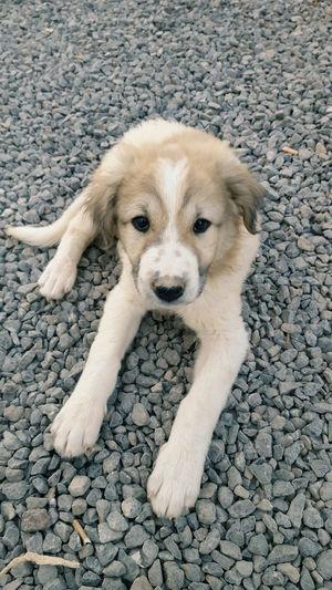 Hi Ho Silver! Pets Lifeisgood Friends Animalplanet Natgeo Smile Wallpaper Simple Photography Animals Cute