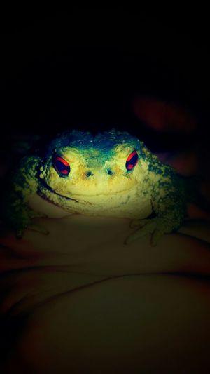 Frog France