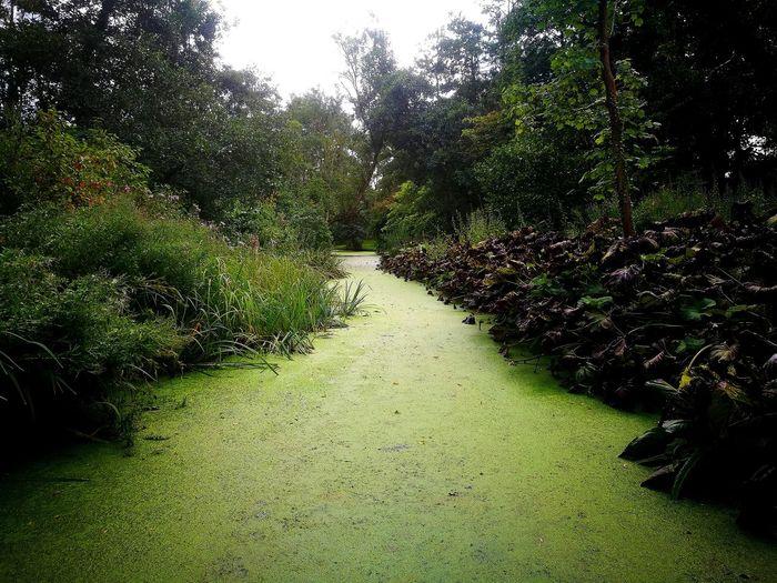 Nature Grass