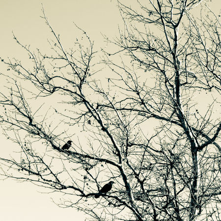 Crows NX500 SamsungNX500 Trees Dark Mood Bleak Shadow