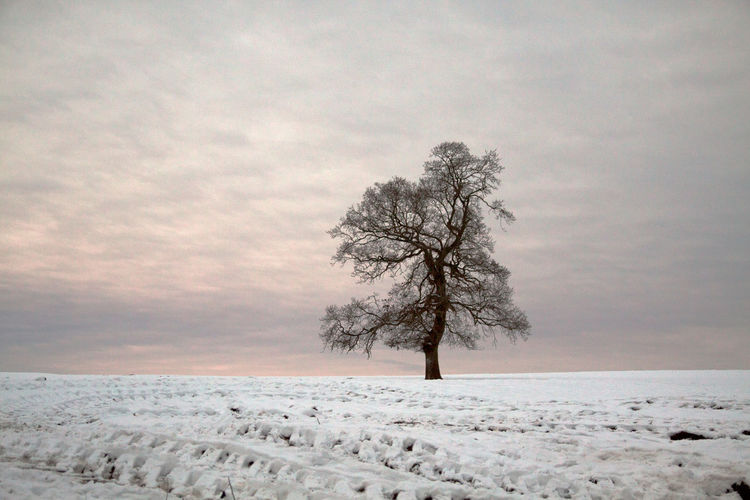 Scenic view of tree on snow covered landscape against sky