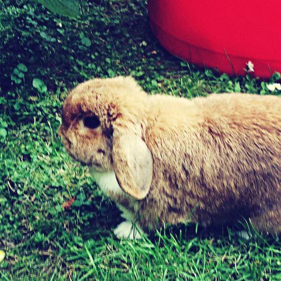 Baby Bunny  Garden