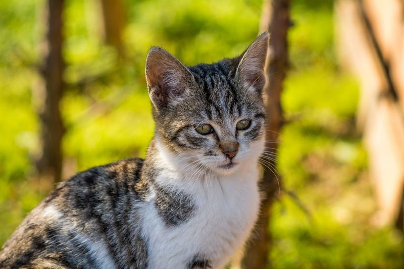 Close-Up Of Tabby Cat Outdoors