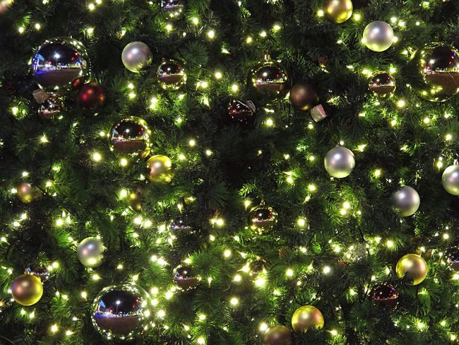 Getting In Touch Escaping Christmas Tree Christmas Lights Christmas Decorations Christmastime Light Lights Light Up Your Life