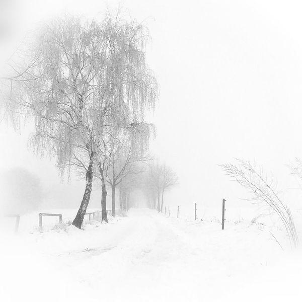 into the white Trees Winter Winter Wonderland Snow Silence Deepfreeze Landscape Saarland Monochrome B&w