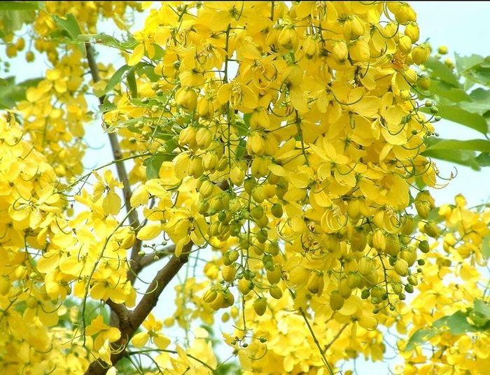 初 夏 🌸 Flower