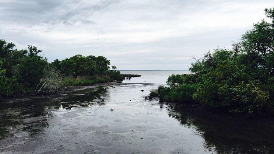 📸: Lake in Nags Head, North Carolina Nature