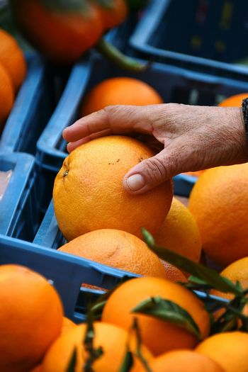 Cropped hand picking orange fruit in market