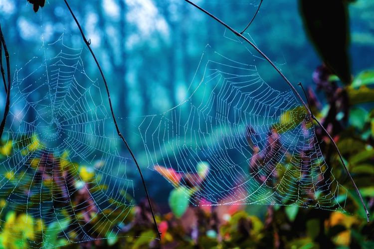 Spider Web Forest Trees Multi Colored Close-up Beauty In Nature Beauty In Nature Focus On Foreground EyeEm Best Shots My Unique Style Exceptional Photography Artistic Expression Hellow World EyeEm Nature Lover Getting Inspired Check This Out 😊 EyeEm Gallery Getting Creative Wilderness Detail Pattern Abstract Full Frame Outdoors Foggy Landscape