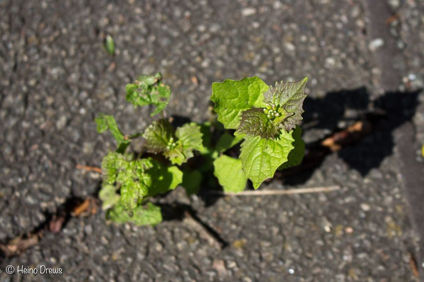 Leaf Plant Growth Nature Outdoors No People Day Close-up Sunlight Green Color Road Freshness Fragility