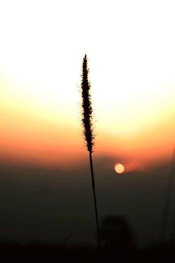 Close-up of silhouette plant against orange sky