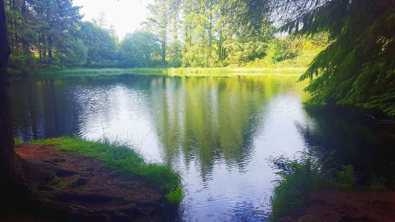 Tree Tranquil Scene Lake Water Scenics Tranquility Reflection Beauty In Nature Non-urban Scene Growth Calm Nature Green Countryside Green Color Remote Water Lake Tranquil Scene Tree Reflection Tranquility Scenics Beauty In Nature Nature