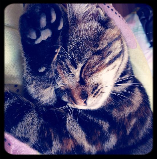 Sleeping Cat Minnie  Cute Pets Ilovemycat