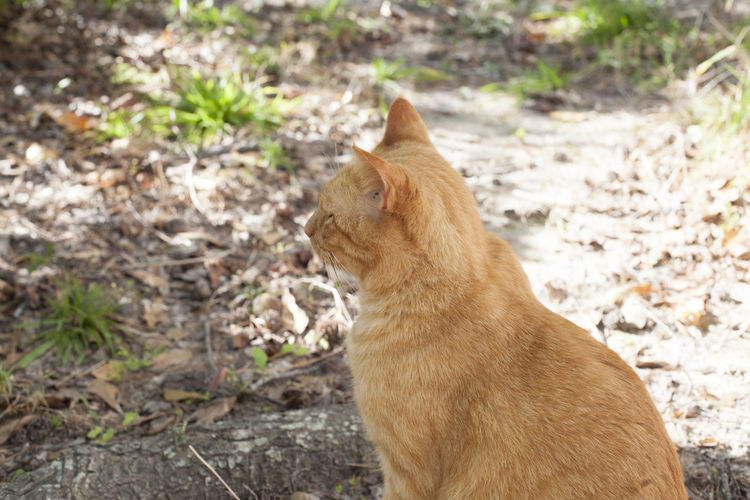 View of a cat looking away
