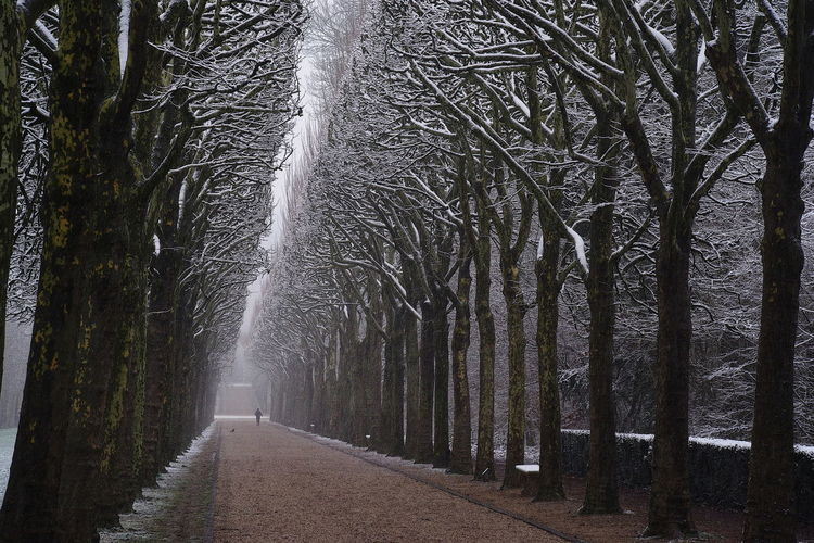 Silhouette Alignment Of Trees Contrast Park Plane Trees Snow Covered