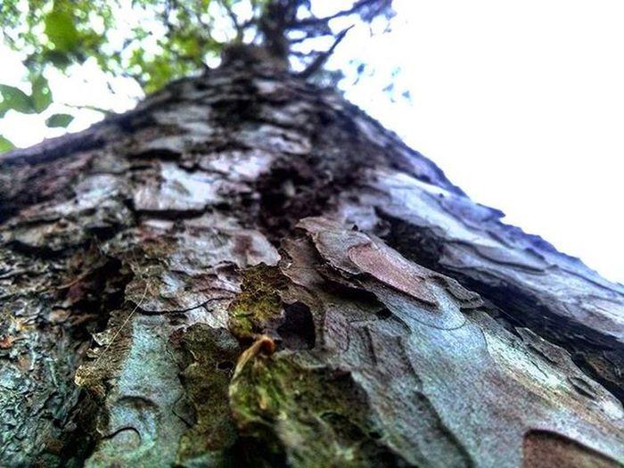 Просто пішли з друзями в не величку подорож і надибали сосну, і получилася доречі непогана фотка, на мою думку(ToT) (';') (^_-) (^m^) фото Ліс друзі класнаподорож Woods Garden Frends Foto (´⊙ω⊙`)ฅʕ•̫͡•ʔฅ (*ơ ₃ơ)ฅ( ͡° ͜ʖ ͡°)✧