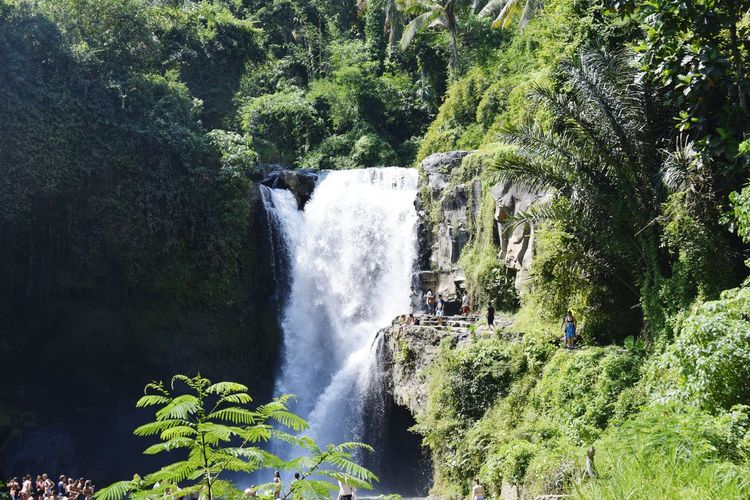 Ubud, Bali - Indonesia Motion Waterfall Water Long Exposure Scenics Beauty In Nature Nature Plant Flowing Water Green Color Growth Flowing Power In Nature Green Day Purity Lush Foliage Non-urban Scene Outdoors Freshness EyeEm Best Shots Eye4photography  Tranquil Scene Beauty In Nature