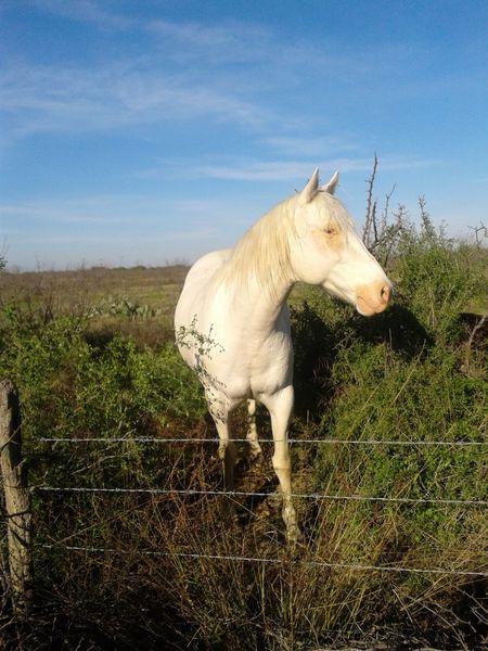 Horse Photography  Animals Mexico_maravilloso Coahuila, México