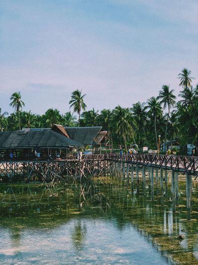 Surf Beach Palm