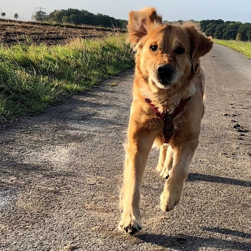 Dogslife Greta