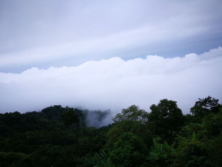 Tree Mountain Water Tree Area Storm Cloud Forest Nature Reserve Natural Phenomenon Social Issues Pinaceae Foggy Lightning Meteorology Cloudscape