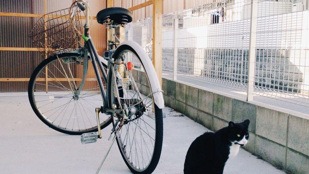 The Street Photographer - 2017 EyeEm Awards wanna ride with me hooman? Bicycle Cat City Street Photostory