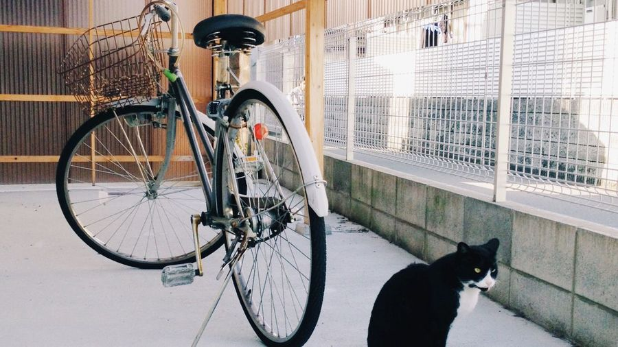Cat by bicycle in balcony