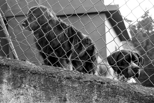 55mm Animal Themes Black&white Blackandwhite Blackandwhite Photography Blanco Y Negro. Canarias Chuchos! DogLove Eye4photography  EyeEm Gallery Fujifilm FUJIFILM X-T10 Fujinon 18-55mm Getting Inspired Lensculture Lenscultureportrait Miradas Nature Nature_collection Perros Por El Mundo Retratosanonimos Shootermag Tenerife_bnw X-T10