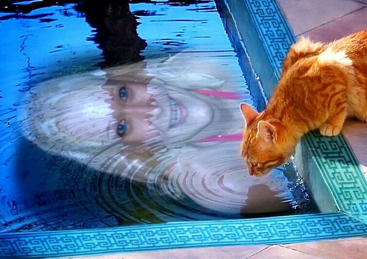 Perfect Match My face captered in the mirror of the swimming pool water...and the cat of my friends tried also to look in.. :-)