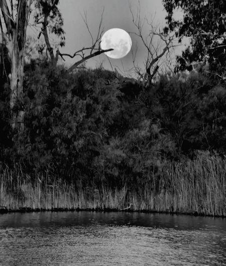 B&w Full Moon Daytime Moon Nature On Your Doorstep from my front door