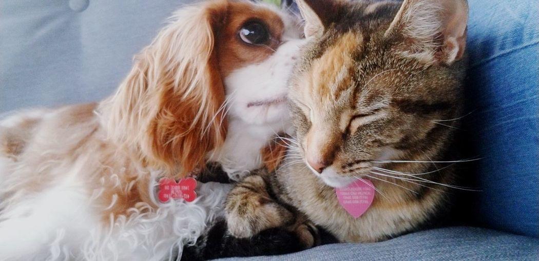 Collar Pets