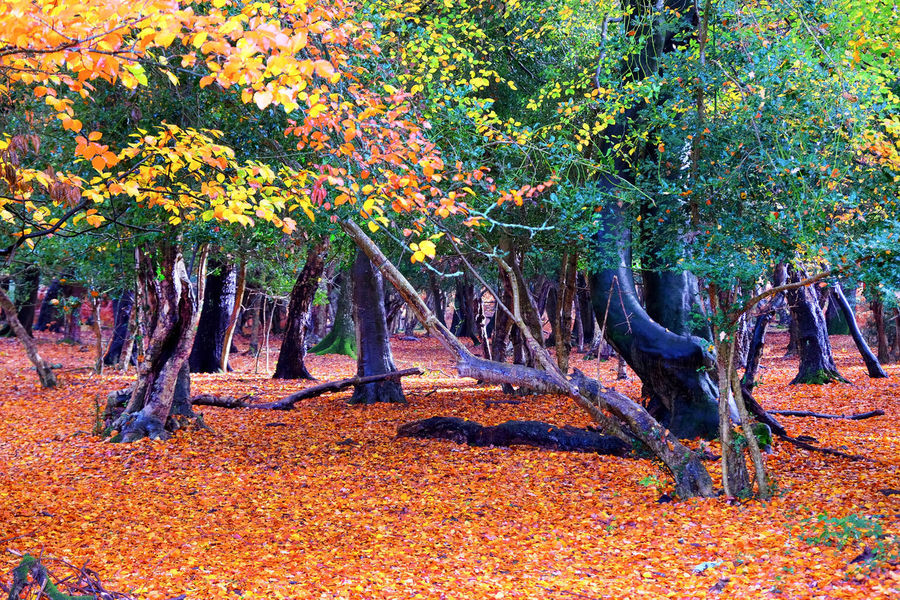 Autumn colors Autumn Autumn Leaves autumn mood Autumn🍁🍁🍁 Tree Plant Growth Beauty In Nature Nature Tranquility Land Tranquil Scene Day Scenics - Nature No People Tree Trunk Plant Part Field Trunk Forest Park Change Leaf Outdoors
