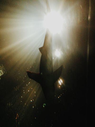 EyeEmBestPics Shark Nature