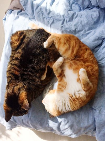 High Angle View Of Cats Relaxing On Bed At Home