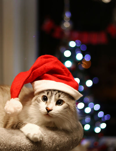 Christmas Christmas Tree Pets Domestic Animals Animal Night Portrait EyeEm Selects Looking At Camera Holiday - Event Celebration Christmas Decoration No People Cute Indoors  One Animal Tree Mammal Santa Hat Christmas Lights Close-up Beauty Animal Themes Puppy Cats