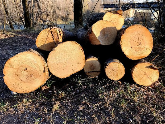 Wood Log Timber Lumber Industry Firewood Wood - Material Tree