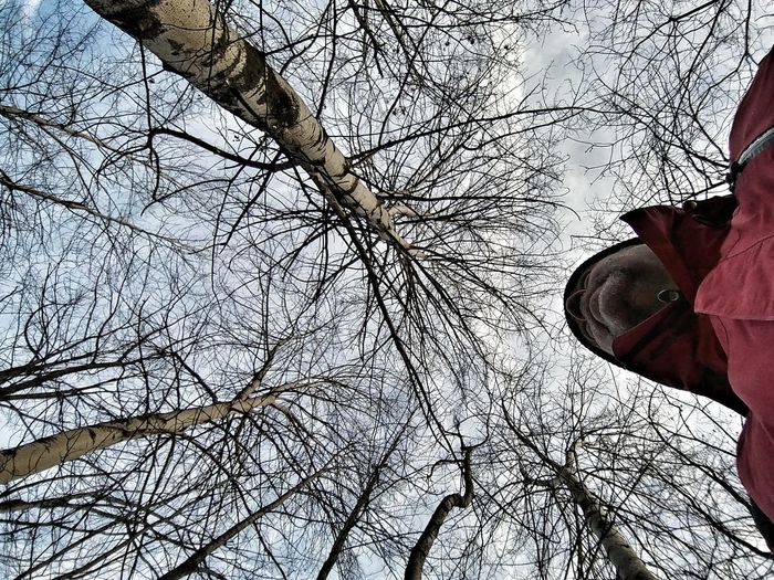 self sky trees portrait Italy🇮🇹 Alps Italy Piemonte Bardonecchia Valle Di Susa Winter Tree Low Section Branch Winter Snow Bare Tree Sky Close-up