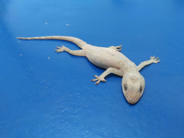 High angle view of lizard