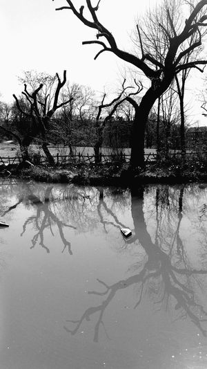 Lines And Shapes EyeEm Best Shots Eye4photography  Eyeemphotography EyeEmBestPics Outdoor Photography Black & White Black And White Blackandwhite Black And White Photography Tree Outdoor Dead Pond Water Water Reflections Shadow
