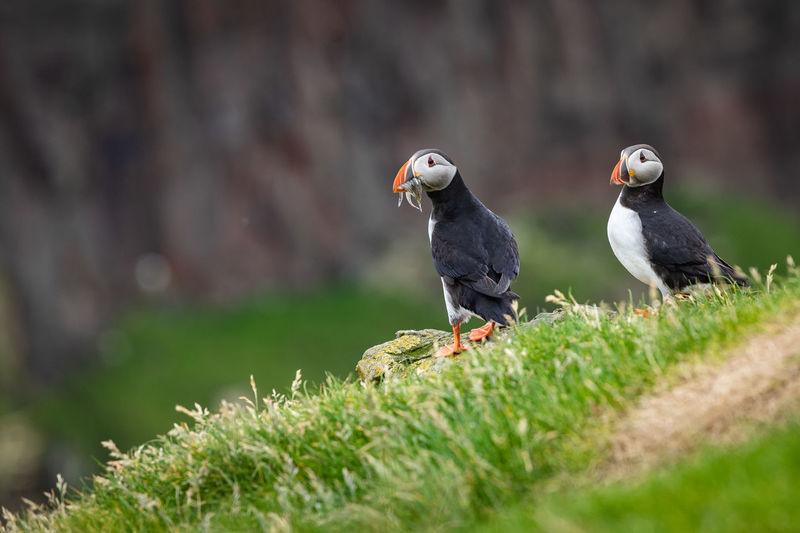Birds perching on a land