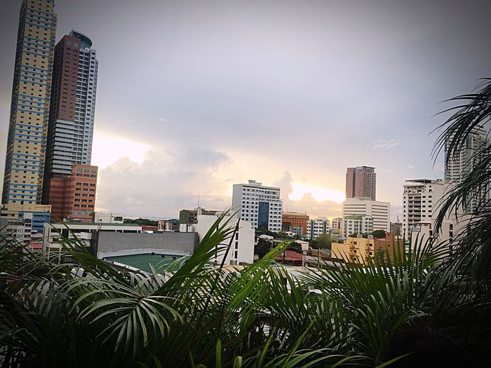 Jungle inside the city. Nearby Cityscape IPhoneography Randomshot Sunset