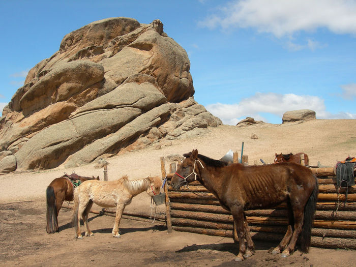 Horses Against Sky