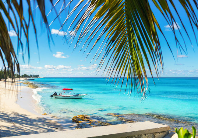 😆Living in a dream😆~ Sea Palm Tree Blue Water Sky Tree Beach Vacations Nature Outdoors Tranquil Scene Beauty In Nature Grandturk Turksandcaicos Landscape Nature Dive Scuba Diving Paradise