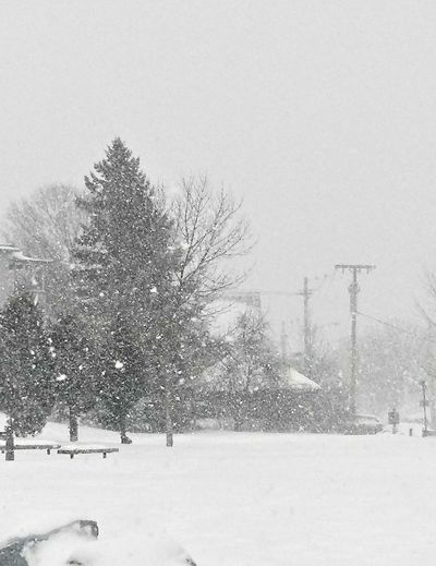 The storm advances ~ Its getting a little hard to see! Winter Snow Cold Temperature Snowing Frozen Nature Outdoors No People Tree Day Snowflake Beauty In Nature Sky Tranquility Snowstorm 2018 Time To Reflect Loving The Landscape My Neighborhood. Tranquil Scene Strength Of Nature Happy Moments My Life In Portland Maine USA