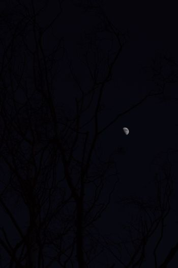Adventurelands Photography Explorers Connect New Forest National Park Wintertime Astronomy Bare Tree Beauty In Nature Branch Clear Sky Half Moon Moon Moon Surface Moonlight Nature Night No People Outdoors Planetary Moon Scenics Silhouette Sky Tranquil Scene Tranquility Tree