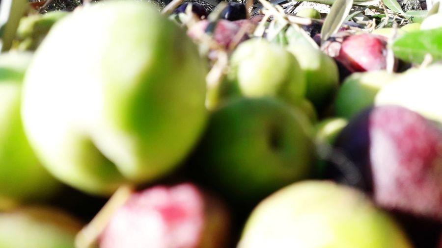 #OliveGarden #Nature  #green #olivetrees #olive Close-up