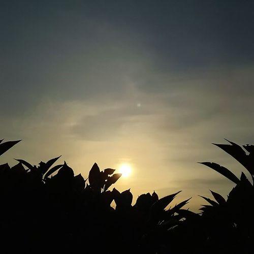 今日もお疲れ様でした。 空 イマソラ Sky 夕方 夕陽 草花 おつかれさま