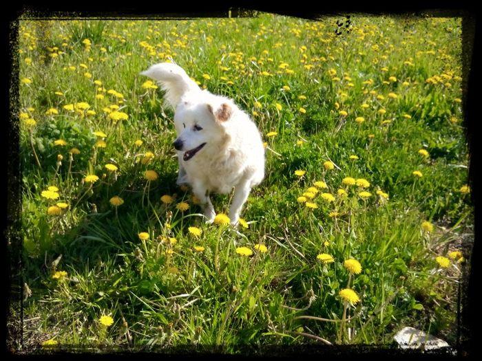 моя собачка I Love My Dog❤