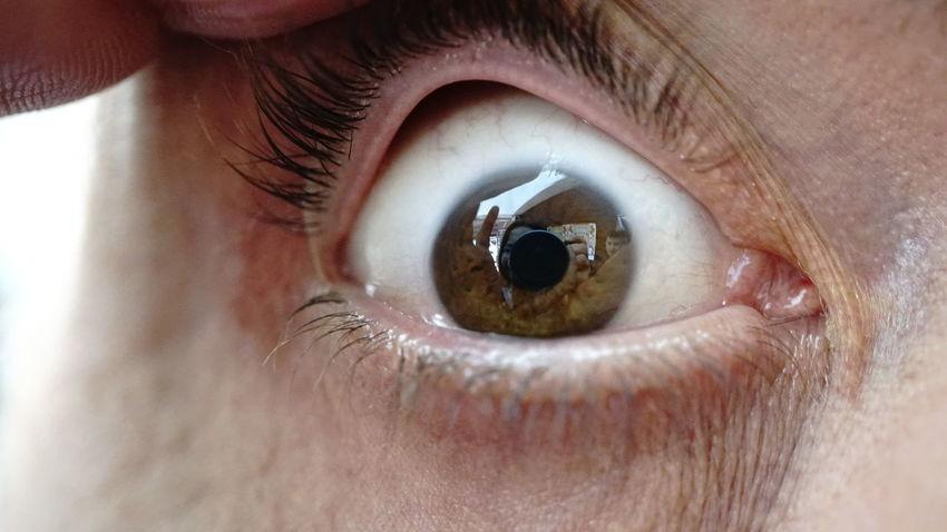 Eyeball Eyelash Eyesight Iris - Eye Human Eye Portrait Eyebrow Sensory Perception Hazel Eyes  Looking At Camera Eyelid Eye Test Equipment Eye Make-up Lens - Eye Eye Brown Eyes Eye Exam  Eye Color Iris Face Powder Eyeliner Lens - Optical Instrument Mascara Optical Instrument Eyeshadow Vision Optometrist Ophthalmologist EyeEmNewHere